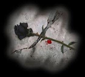 rosa nera con il sangue sacro femminile