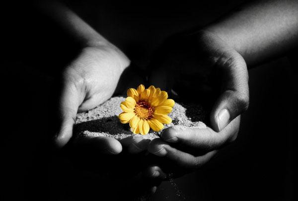 Sabbia e fiore tra le mani orfani spirituali