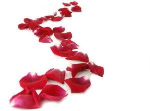 La via femminile di rose