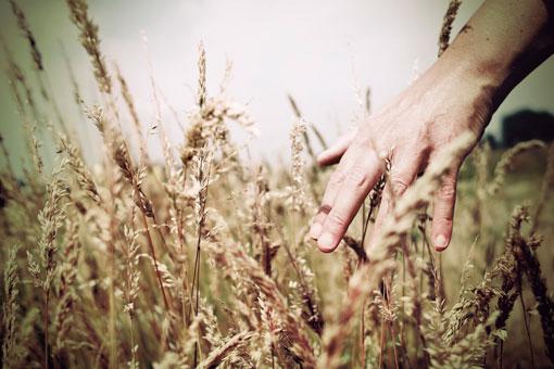 Mani nella terra