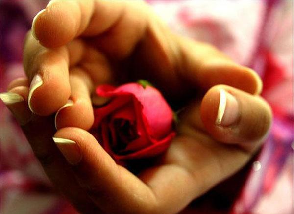 Rosa tra le mani come una vagina